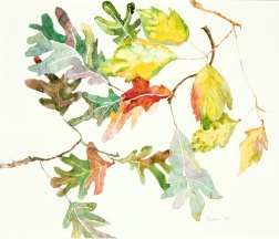 White Oak and Birch leaves, watercolor on paper,16 x 20 inches
