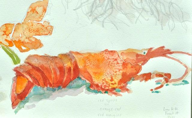 Marblehead lobster
