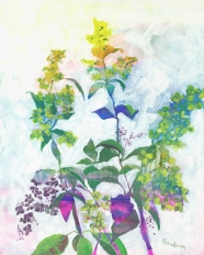 Lacecap Hydrangea, late August, acrylic on board, 20 x 16