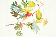 Birch and White Oak Leaves, watercolor on paper, 16 x 20 inches