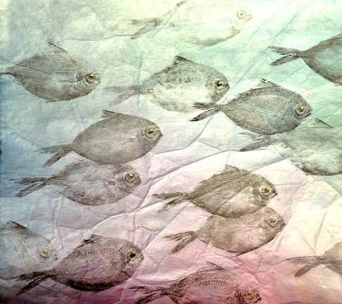 School of Butterfish, 1 fish 15 times 12 x 12 inches